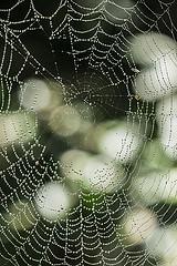Spider Web_Benjamin Balazs